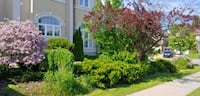 Landscaping/clean up/weeding/sod/etc. Newmarket