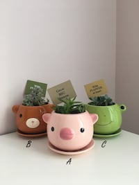 Assorted Succulents in Ceramic Animal Planters Calgary, T3P 0A3