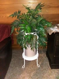 gray pot with green leaf plant 2629 km
