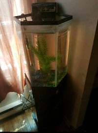 Fish tank and stand  Kitchener, N2A 2G4