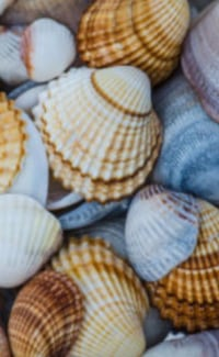 Full Box contains Shells for sale Toronto, M4V 2H4
