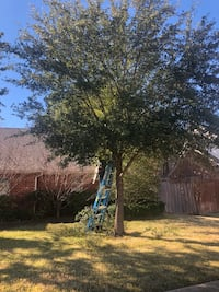 Tree service  Coppell
