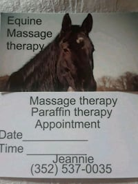 Equine Massage Silver Springs