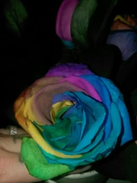 Rainbow roses Kingman, 86409