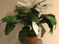 Artificial Calla Lily Flowering Plant in Pot Herndon