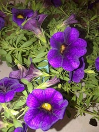 Gorgeous flowers, several to choose  Baltimore, 21206