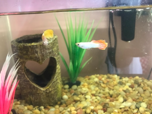 Fish tank / pump / heater/ accessories and fish