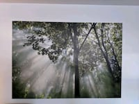 """Forest Wall Art Canvas 55"""" x 78"""" Mississauga, L5H 1H3"""