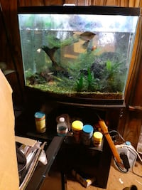 40 Gallon Fish Tank with Fish and extras Ankeny, 50023