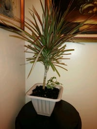 green leaf plant with white ceramic pot Springfield, 01129
