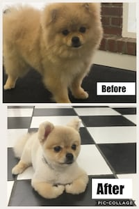 DOG GROOMING SERVICES DC area Washington