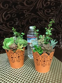Live Fall Succulent Arrangement Visalia