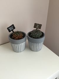 Two Succulent Plant in Pots Calgary, T3P 0A3