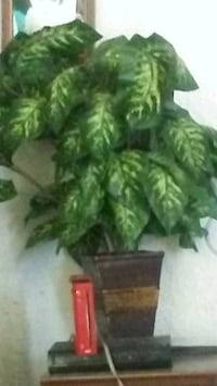 green leaf plant with brown pot Roswell, 88203