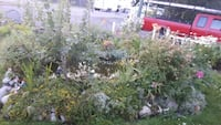 Outdoor fully stocked pond plants & fish included  Surrey, V3R 3V1