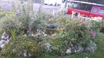 Outdoor fully stocked pond plants & fish included