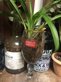 Plants in glasses, bottles and jars, easy to care for
