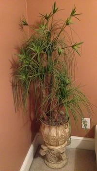 Lifelike plastic ponytail palm with stand
