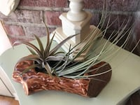 Air plants in vintage planter that looks like a log