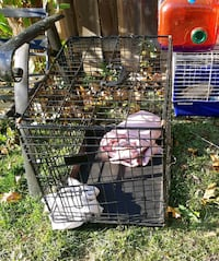 small pet cage Kitchener, N2K 1E8