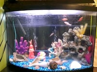 35 gallon fish tank with fish and accessories  Kitchener, N2A 2R8
