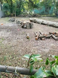 Free pecan wood you can have it Pensacola, 32505