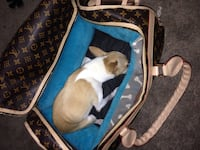 Monogram 40 Louis Vuitton dog bag Spruce Grove, T7X