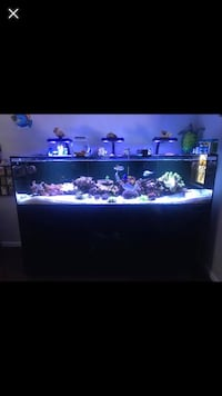 Reef Tank —- 350 with Equipment Morgan Hill