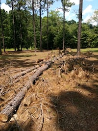 Pine trees cut up. Come and get it for fire wood Vidalia, 30474