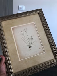 Vintage Botanical print - perfect for the kitchen  Whitby, L1M 2M7