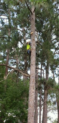 Tree removal and small land clearing DeFuniak Springs