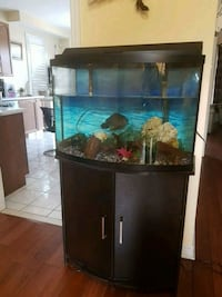 40 gallon Bow Fish tank with stand Brampton, L6V 4P6