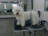 Dog grooming Tinley Park