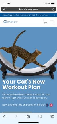 Cat Wheel - exercise wheel for cats Kitchener, N2A 4N1