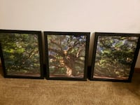 Three piece framed tree picture. Oregon, 53575