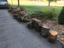 Free Firewood-view all 4 pics