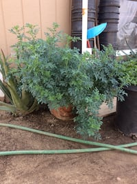 Green leaf plants and brown clay pots Perris, 92570