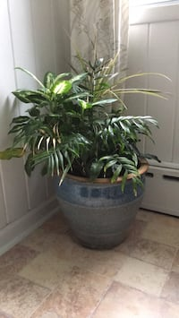 mixed arrangenant houseplants with   ceramic pot. East Patchogue, 11772