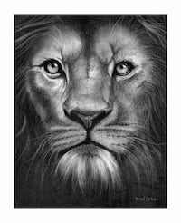 Lion charcoal drawing  Beaumont, T4X 1C6
