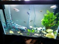 70 gallon fish tank  714 km