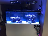 REEF LED LIGHTS VIPARSPECTRA Vaughan, L4H 0L9
