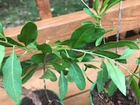 green leaf plant with green plant Herndon