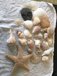 Crafter delight, shells, corals and pretty rocks