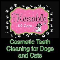 Dog and Cat Cosmetic Teeth Cleaning Barrie