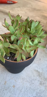 Plant.  succulents in small clay pot Long Beach, 90805