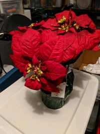 Fake poinsettia,cube Christmas blocks, center Satellite Beach, 32937