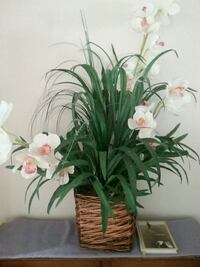 white-and-pink orchids centerpiece Rockledge, 32955