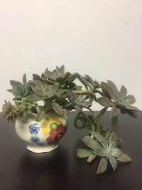 Succulent plant/Christmas decoration/gift