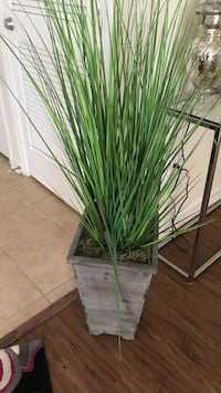 green grasses in brown wooden pot Tampa, 33602