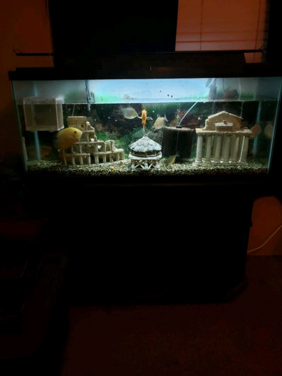 Photo 55 gallon fish tank w stand and more